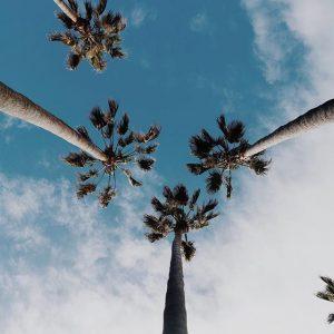ヤシの木,ココナッツ,
